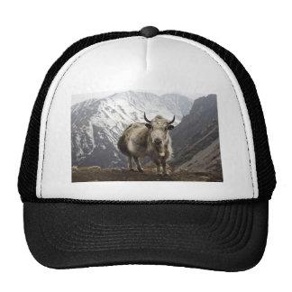 Yak in Nepal Cap