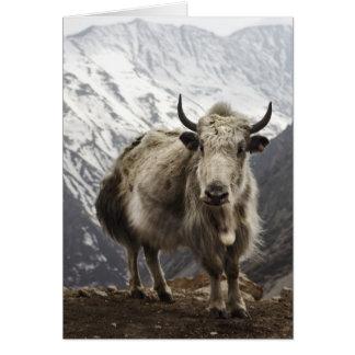 Yak in Nepal Greeting Card
