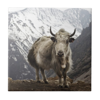 Yak in Nepal Small Square Tile