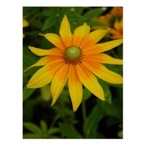 Yellow and Orange Flower Postcards