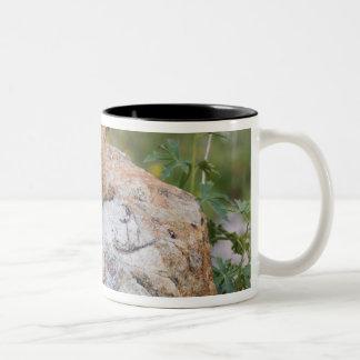 Yellow-bellied Marmot, Marmota flaviventris, Two-Tone Coffee Mug