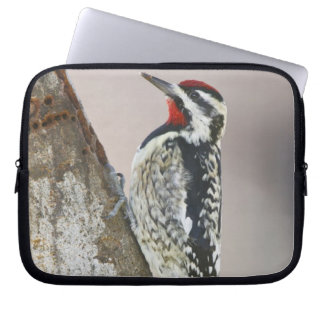 Yellow-bellied Sapsucker male feeding on sap Laptop Sleeve