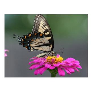 Yellow Butterfly on Pink Zinnia Flower Postcard