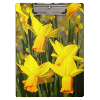 Yellow Daffodils Floral Clipboard