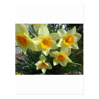 Yellow Flower pattern Postcard