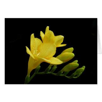 Yellow Freesia Bloom & Bud Note Card