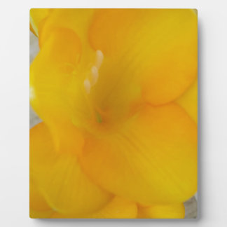 Yellow Fresia Plaques