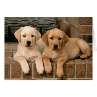 Yellow Labrador Retriever Card