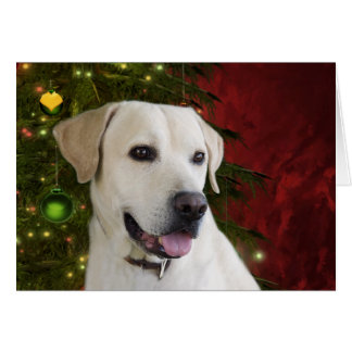 Yellow labrador retriever Christmas Card