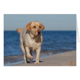 Yellow labrador retriever on the beach card