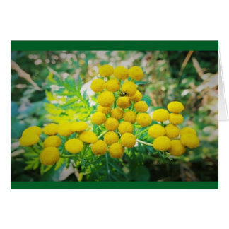 Yellow Lady Bug on Tansy Flowers Card
