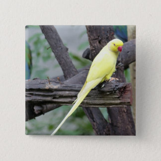 Yellow Lutino Ring Necked Parakeet in a tree 15 Cm Square Badge