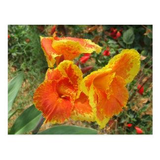 Yellow Orange Flower Postcard