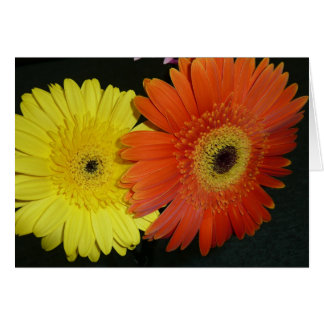 Yellow & Orange Gerber daisy Greeting Cards