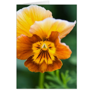 Yellow/Orange Pansy Card (Portrait)