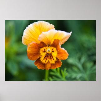 Yellow/Orange Pansy Print