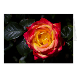 Yellow & red rose greetings card (inc. envelope)