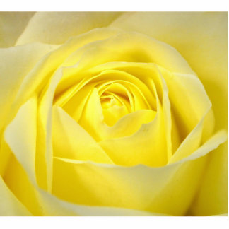 Yellow Rose Acrylic Cut Outs