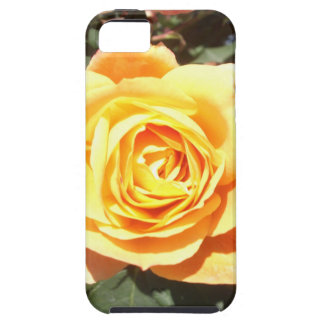 Yellow Rose with Orange Tinge Case For The iPhone 5