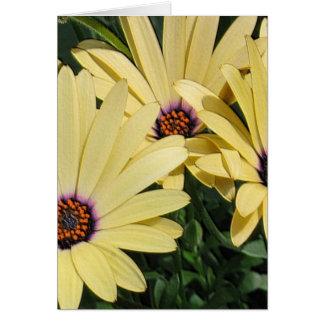 Yellow Shasta Daisies Cards