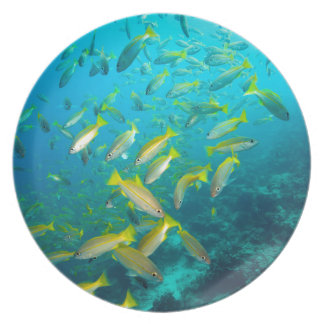 Yellow snapper fish on coral reef plate