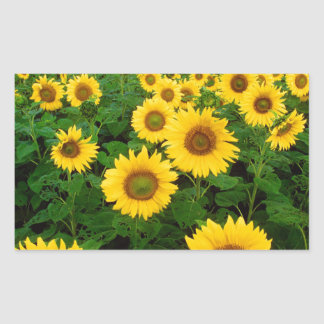 Yellow Sunflowers Rectangular Sticker