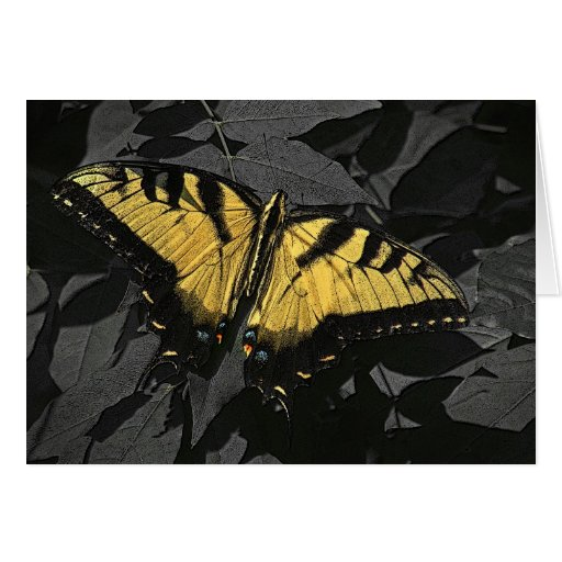 Yellow Swallowtail Butterfly Note Card