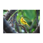 Yellow Tropical Bird Wrapped Canvas Gallery Wrap Canvas