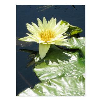 Yellow waterlily postcard