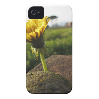 Yellow wildflower growing on stones at sunset iPhone 4 covers
