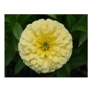 Yellow Zinnia Flower Postcard