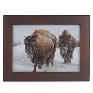 Yellowstone Bison Keepsake Box
