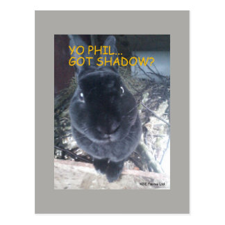Yo Phil, Got Shadow - Postcard