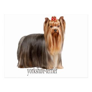 yorkshire-terrier dog breeds postcard