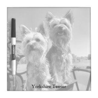 Yorkshire Terriers, Black & White, Square Dry Erase Board