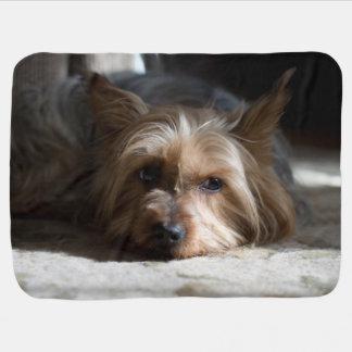 yorky / yorkshire /silky terrier baby blanket