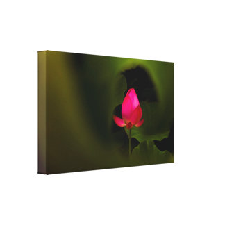 You-The Only | Lotus Fairyland Photographic Art -7 Canvas Print