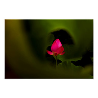 You-The Only | Lotus Fairyland Photographic Art -7 Poster