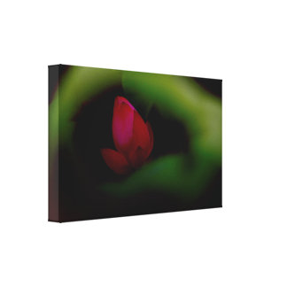 You-The Only | Lotus Fairyland Photographic Art -8 Canvas Print