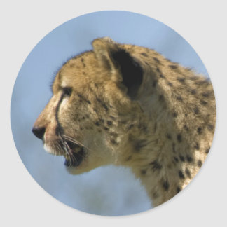 Young Cheetah Classic Round Sticker