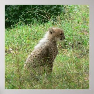young cheetah print