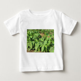 Young green beans plants in rows in the garden baby T-Shirt