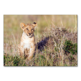 Young lion card