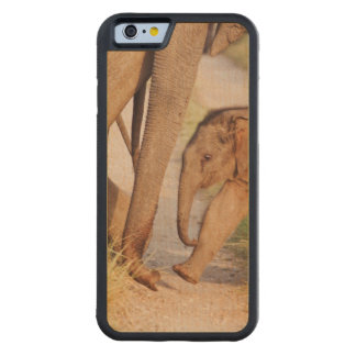 Young one of Indian Asian Elephant Carved Maple iPhone 6 Bumper Case