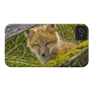 Young Red Fox looking through fence on San Juan iPhone 4 Case-Mate Case