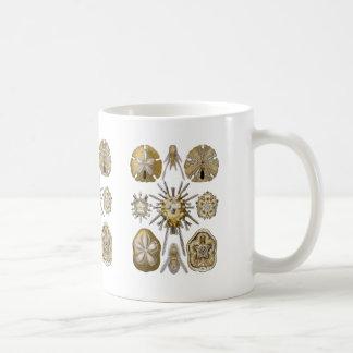 Young Sea Urchins Basic White Mug