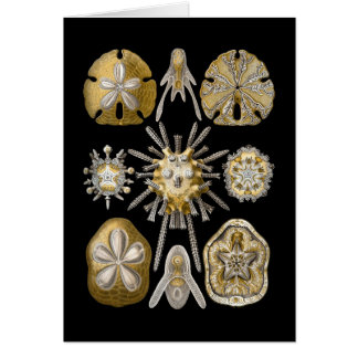Young Sea Urchins Greeting Card