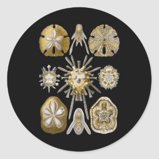 Young Sea Urchins Round Sticker