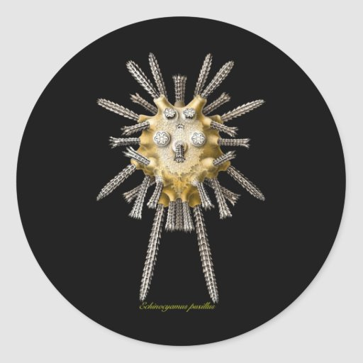 Young Sea Urchins Round Stickers