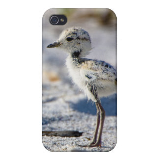 Young Snowy Plovers (Charadrius alexandrinus) iPhone 4 Cover